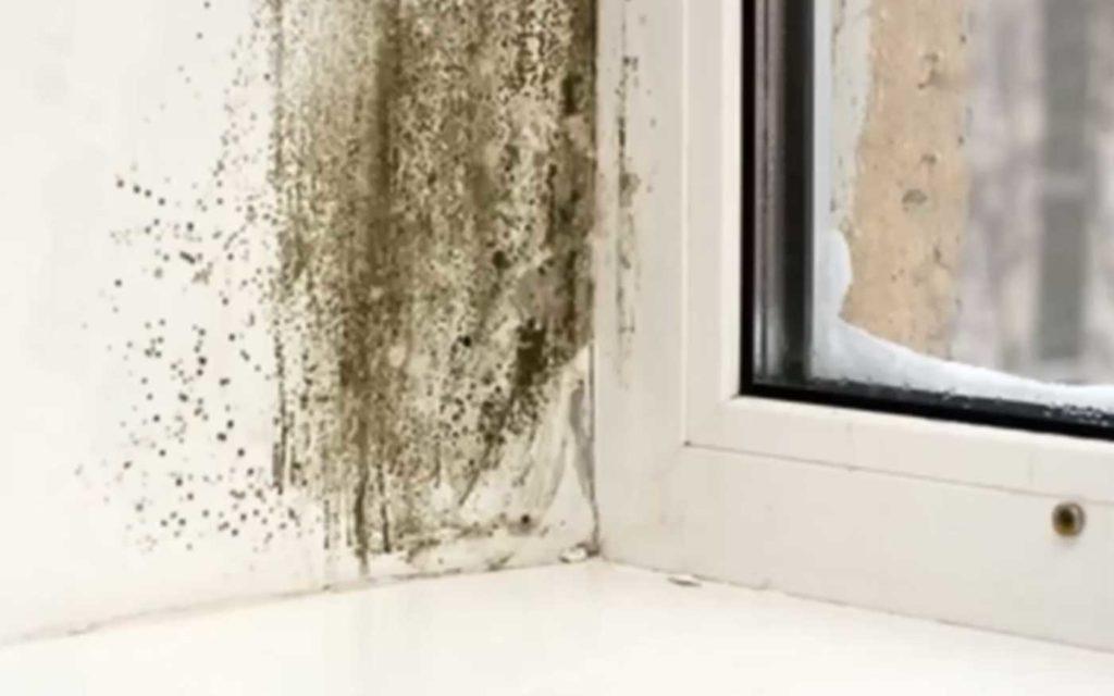 плесень на герметике и откосе окна